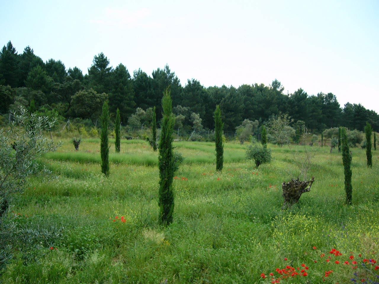 Córdoba Sierra - Country garden