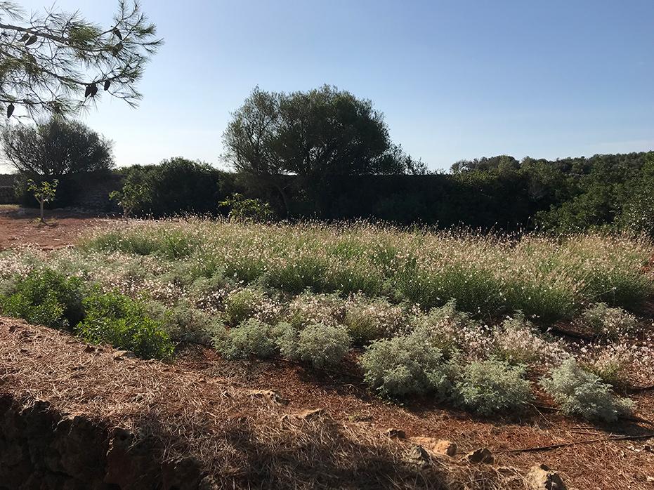 San Clemente - Jardín de campo