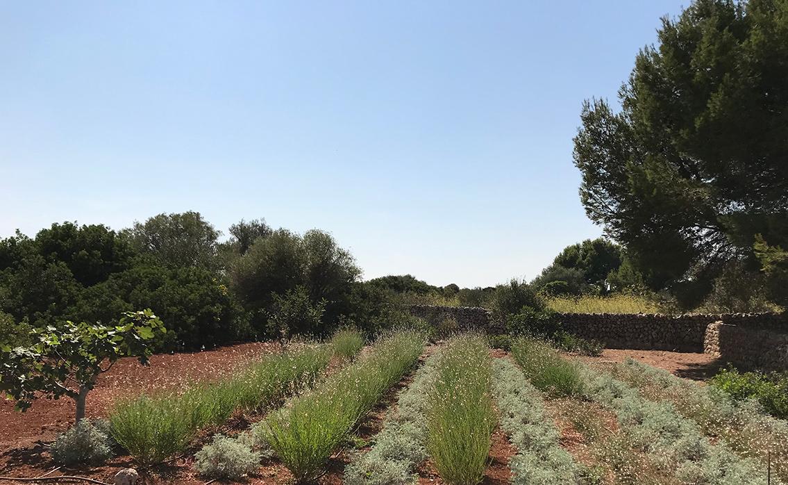 San Clemente - Country garden